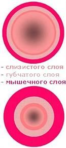 Женская Эрекция